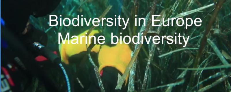 Short movie: Biodiversity in Europe – Marine biodiversity